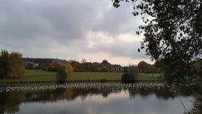 The Lake in Louvain La Neuve. Birds on the lake of Louvain La Neuve Stock Photography