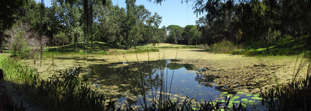 Lake in lush park in Florida. Placid lake in lush park in Florida Royalty Free Stock Photos