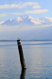 Lake Maggiorie and snowy Alps Stock Images