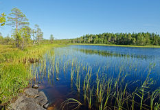 Lake Magrino in Karelia Royalty Free Stock Photo