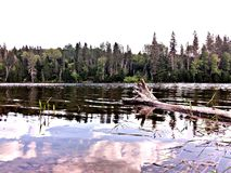 Lake. Maine trees forest northwoods sunset sunrise clouds sky field lake water royalty free stock photography