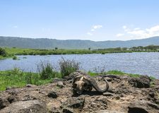 Lake Makat at ngorongoro crater in Tanzania. This picture is taken in Ngorongoro Conservation Area Tanzania. The Ngorongoro Conservation Area NCA is a protected stock photography