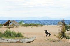 Lake Malawi - Malawi Royalty Free Stock Image
