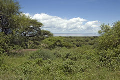 Lake Manyara Royalty Free Stock Images