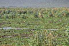 Lake Manyara National Park Royalty Free Stock Images