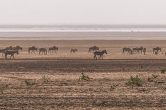 Lake Manyara National Park Royalty Free Stock Photo