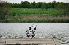 Carp Fishing on Lake Royalty Free Stock Photo