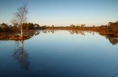 Lake in a marsh in Estonia Royalty Free Stock Image