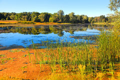 Lake and marsh lands Stock Images