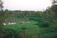 Lake marsh Royalty Free Stock Photography