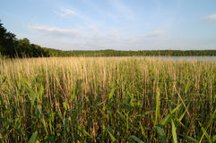 Lake in Mazury Region Poland Royalty Free Stock Photos