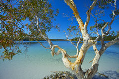 Lake Mckenzie Royalty Free Stock Photography