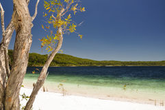 Lake McKenzie on Fraser Island - Queensland, Australia Royalty Free Stock Photography