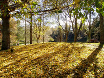 Lake Mclaren Park. Trees during autumn at Lake Mclaren Park, New Zealand stock image