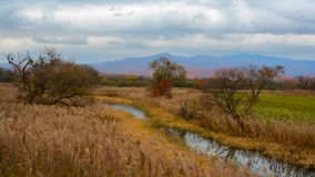 Lake in the meadow. In autumn stock images