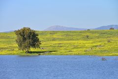 Lake and meadows in golan Heights. Early Spring israel royalty free stock photography
