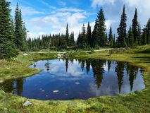 Lake in the Meadows in Revelstoke Canada with Mirror refection. The Meadows in Revelstoke Canada at the top of the mountain. This blue lake and a perfect mirror royalty free stock image