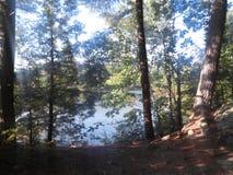 Lake med trees Fotografering för Bildbyråer