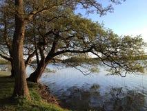 Lake med trees Sjö med träd nära vid Soro i Danmark Lakesideträd i höst Royaltyfri Fotografi