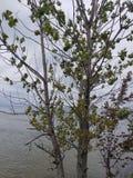Lake Michigan sikt Royaltyfria Foton