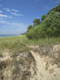 Lake Michigan. Trees and water at Lake Michigan in south Michigan dunes. Sand beach blue sky Royalty Free Stock Photo