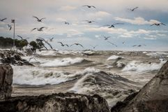 Lake Michigan waves and birds. Lake Michigan in Milwaukee Wisconsin with large waves on a windy day Royalty Free Stock Photo