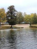 Lake a mirror. Tree seegulls water sky möwen wasser bäume himmel blätter spiegelung Stock Photography