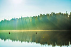 Lake in misty morning Royalty Free Stock Photo