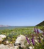 The lake (Montenegro) Stock Photos