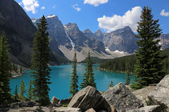 Lake Moraine Spruces Royalty Free Stock Photo