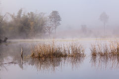 Lake in the morning mood Royalty Free Stock Images
