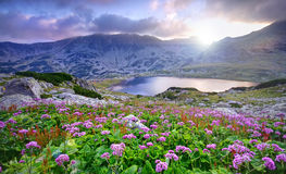 Lake on mountain and flowers Royalty Free Stock Photos