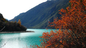 Lake,mountain and Forest. A quiet green lake and red trees in Tibet of China Stock Photo