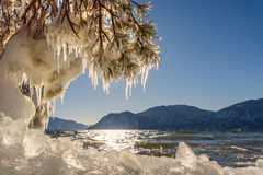 Lake mountain ice icicles pine. Beautiful winter views with the lake, mountains, ice on the shore, the sun glare on the water, and pine branches with icicles on stock photo