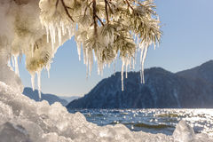 Lake mountain ice icicles pine. Beautiful winter views with the lake, mountains, ice on the shore, the sun glare on the water, and pine branches with icicles on stock images