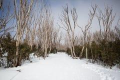 Lake Mountain Trail Royalty Free Stock Photo