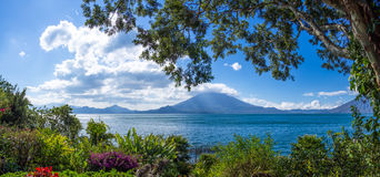 Lake and mountains with foliage. A panoramic view of Lake Atitlan and Toliman Volcano from a lush tropical garden Royalty Free Stock Photos