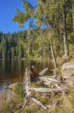 The lake Mummelsee in Seebach Stock Image