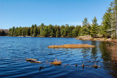 Lake in Muskoka. A picture of a lake in Muskoka Ontario, Canada with trees Royalty Free Stock Image