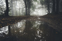 Lake in mysterious forest with fog Royalty Free Stock Image