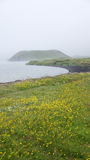 Lake Myvatn pseudocrater and yellow flowers. Myvatn pseudocrater in the mist and yellow flowers in the field stock photography