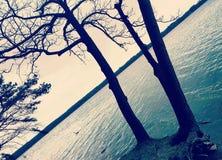 lake nära trees Arkivbilder