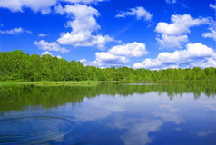 Lake nad forest. View of the lake near the forest in summer Stock Photography