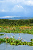 Lake Naivasha Stock Images