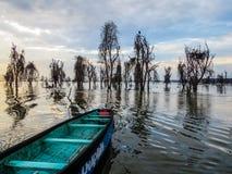Lake Naivasha with dead acacia trees Royalty Free Stock Image