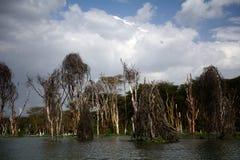 Lake Naivasha, Kenya. Lake Naivasha in Central Kenya Royalty Free Stock Photography