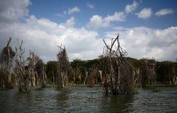 Lake Naivasha, Kenya. Lake Naivasha in Central Kenya Stock Image