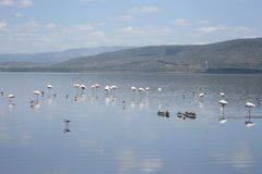 Lake nakuru Royalty Free Stock Image