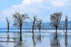 Lake Nakuru Stock Photography