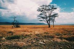 Lake Nakuru. Morning game drive at Lake Nakuru National Park Royalty Free Stock Image